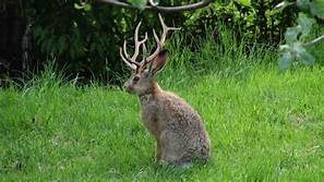 Where are the horns on that Screwy Wabbit?….